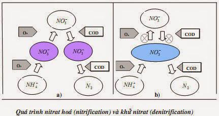 Xử lý nitrat