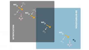 Nitrat hóa là gì