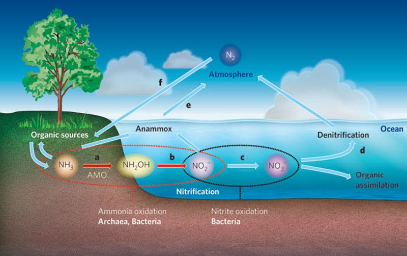 Ứng dụng nitrat hóa đối với môi trường