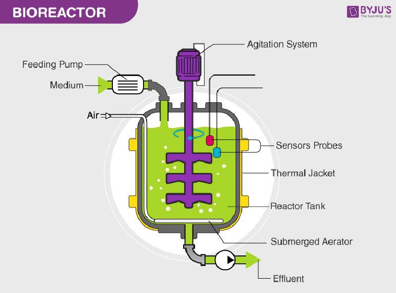 Bioreactor là gì