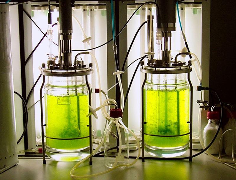 Phản ứng photobioreactor