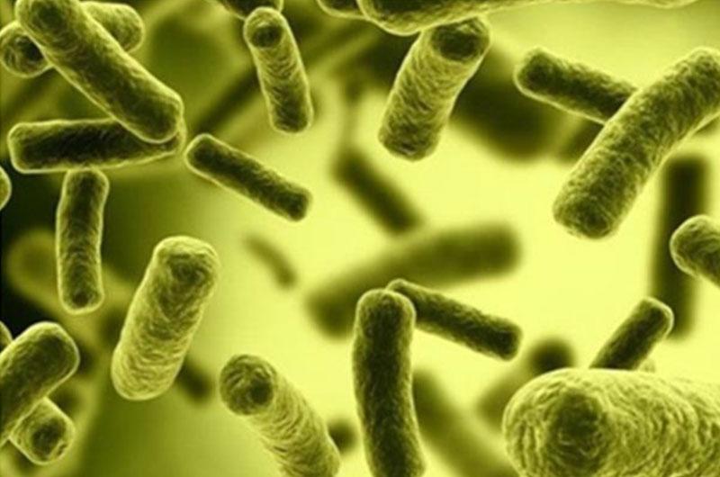 Vi khuẩn coliform trong nước thải là gì